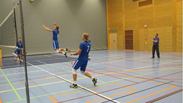 Darryl Shank är ett av hoppen hos Falkenbergs volleybollklubb. Foto: Sveriges Radio.