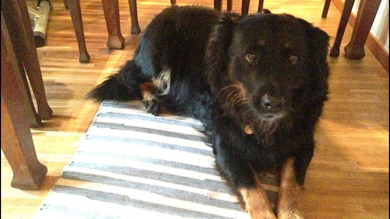 Hunden Luzia och Marika Nöbu-Navarro har levt ihop sedan Luzia var valp. Foto: Sveriges Radio
