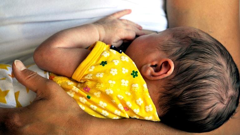 Mamma ammar sitt tre veckor gamla barn. Foto: Hasse Holmberg/TT.