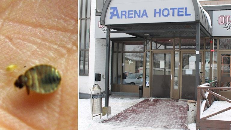 Asylbondet Arena hotell på Vallås i Halmstad har återigen drabbats av vägglöss. Foto: Sveriges Radio.