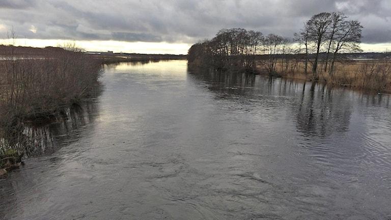 Upp till kanten i Ätran, liksom övriga åar i länet. Foto: Göran Frost/Sveriges Radio