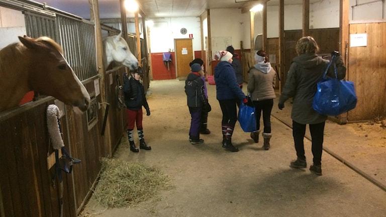 Sportlovslediga barn samlas för ridläger på Nordhallands ridklubb i Lerkil.