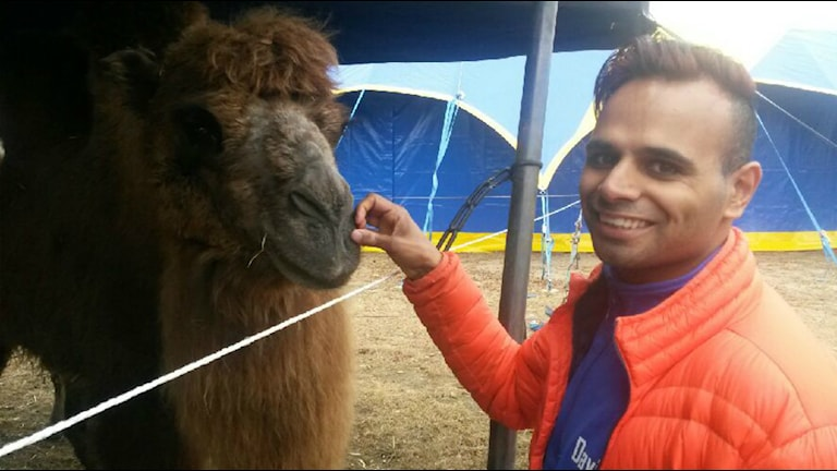 Cirkusarkrobaten David Hammarberg med en av Cikus Olympias Kameler.