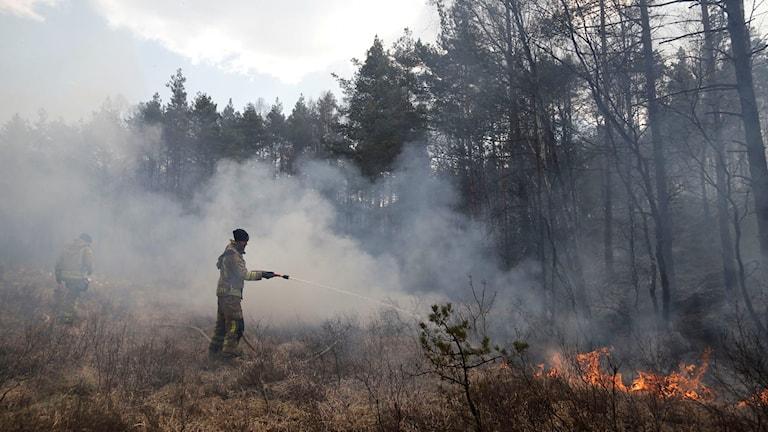 Räddningstjänsten släcker gräsbrand.