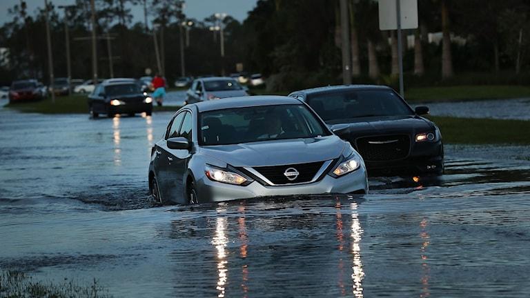 Stormen Irma gör att det är svårt för bilarna att ta sig fram på vägarna i Florida.