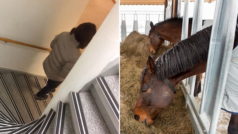 Kvinnan som vill vara anonym. En stall med hästar.