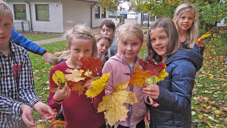Melwin (längst till vänster), Emilia, Sara-Rubi na och Elvira med sina höstlövsbuketter. I bakgrunden också Geroge och Elod. Foto: Göran Frost/Sveriges Radio