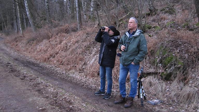 Jörgen och Thomas på spaning efter den stora ugglan. Foto: Göran Frost/Sveriges Radio