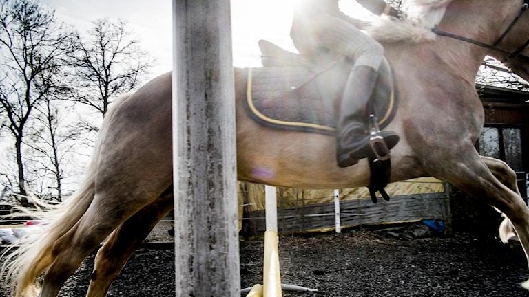 En tjej rider en häst som hoppar över ett hinder.