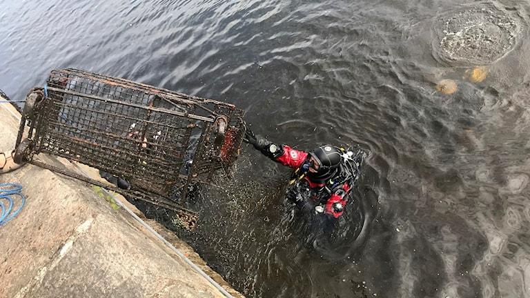Dykare plockar upp kundvagn ur Ätran. Foto: Anton Berglund/Sveriges Radio.
