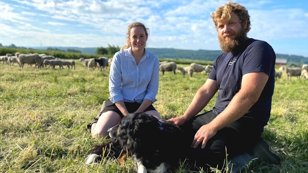 En kvinna och en man sitter i en fårhage med en vallhund framför sig och tittar in i kameran, i bakgrunden syns deras betande får.