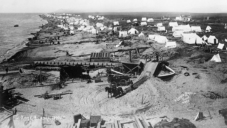Till den hastigt uppvuxna guldruschstaden Nome vid Berings sund i Alaska kom Peter Johnson från Halland i början av 1900-talet. Gammalt vykort.