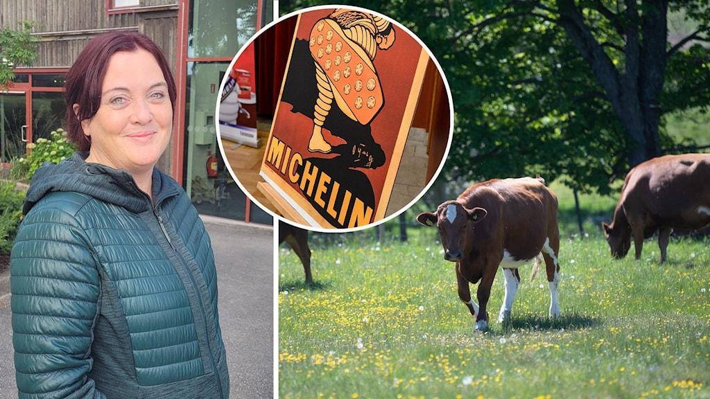Glad kvinna vid sidan av michelinskylt och betande kor
