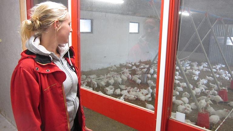 EU-pengarna använde Alexandra till stallbygget för kycklingarna. Foto: Göran Frost/Sveriges Radio