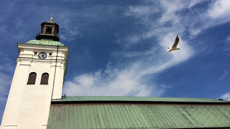 Varbergs kyrkotorn till vänster och taket till höger. Det är blå himmel med några moln och en skrattmås flyger ovanför taket.