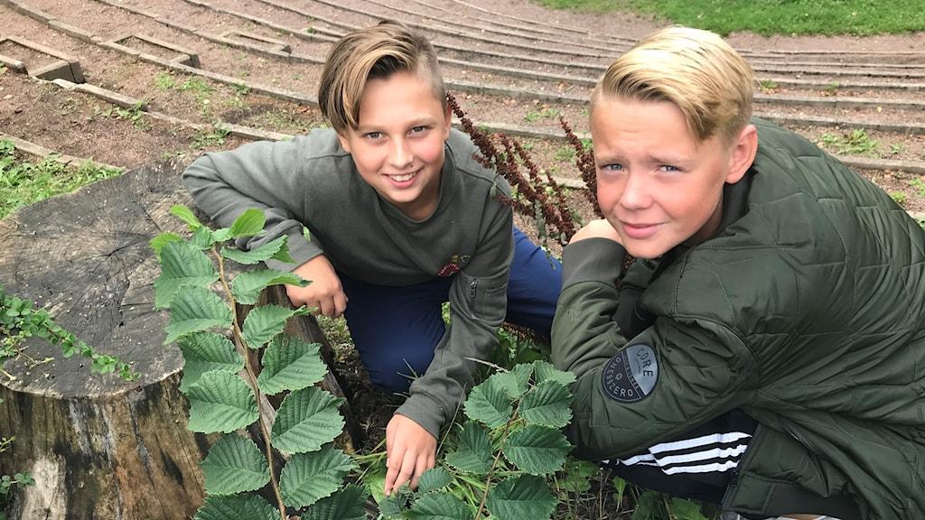 Två pojkar knäböjer bredvid en stubbe i skogen under svampplockning.