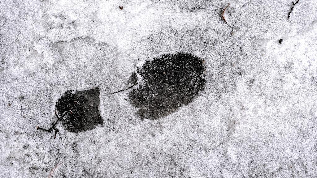 Fotpår i snö.