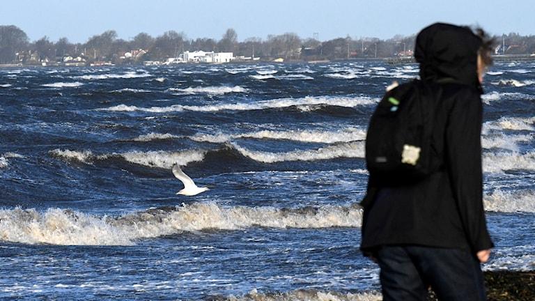 en person med huvjacka som går vid vindpiskat hav.