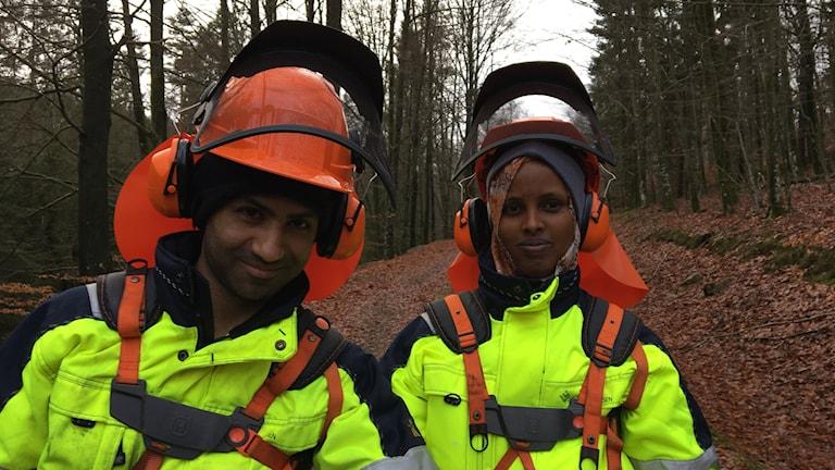 Mohaadi Alhelal och Nasro Ibrahim röjer en skogsbilväg i Biskopstorps naturreservat.