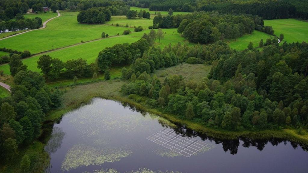 vita sjö med utlagda ramar för att kväva sjögull