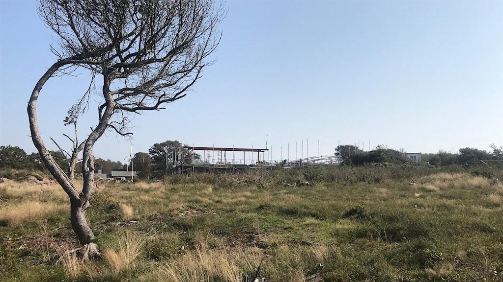 Ett ensamt träd står kvar på platsen där trädskövlingen påstås ha skett