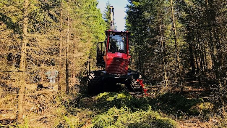 skogsmaskin från Sydved i skogen i Torup.