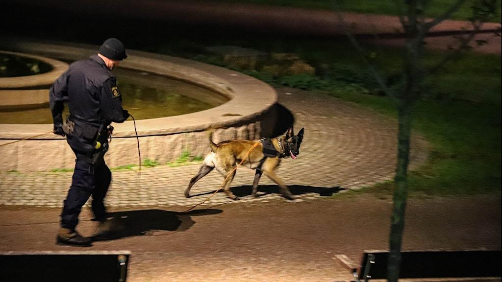 Polis med polishund bredvid fontän i mörker.