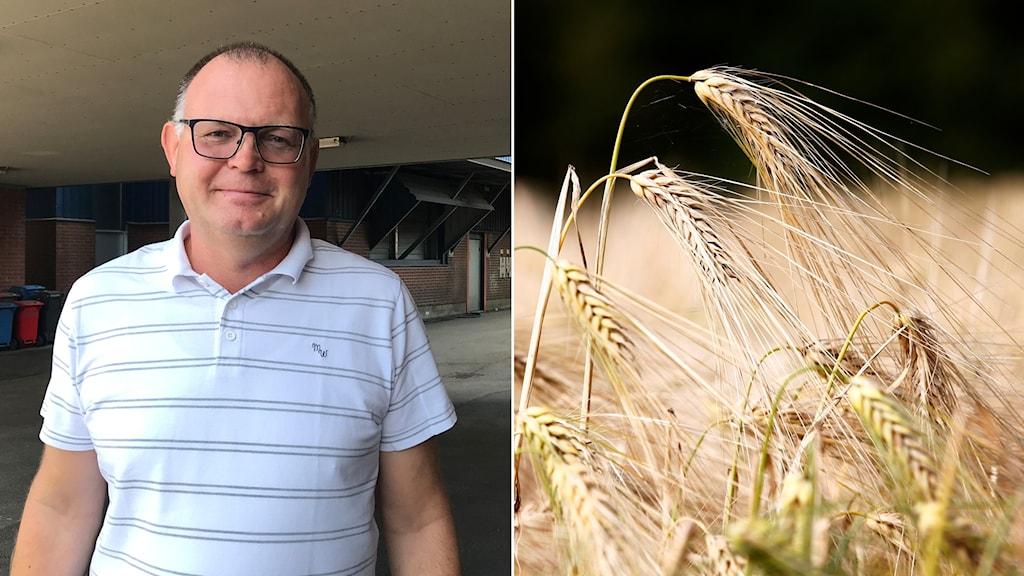 Diptyk med porträtt på Dieter Nowack till vänster och bild på växande korn till höger.