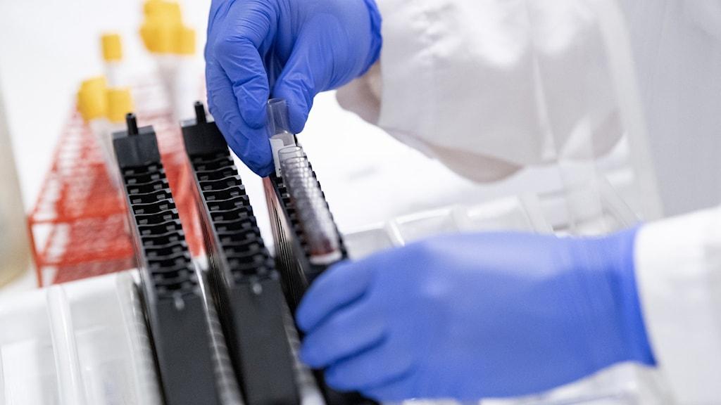 PCR-tester undersöks