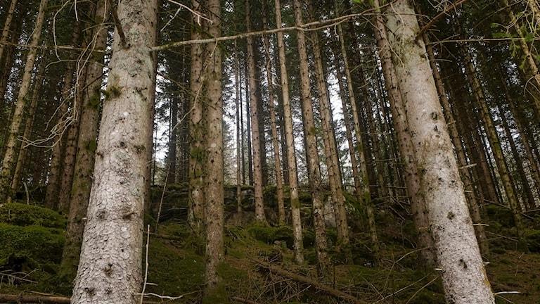 Skog.