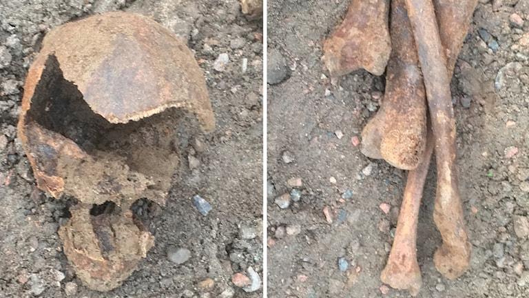 delar av skelett, skalle, ben