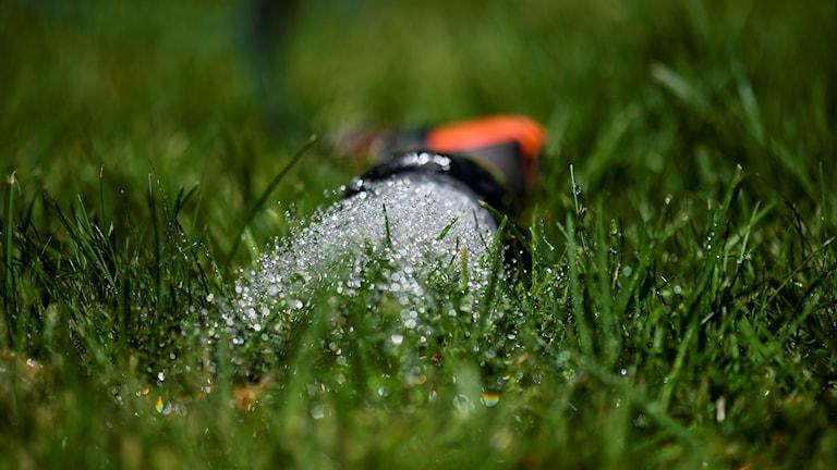 En vattenslang sprutar vatten på en grön gräsmatta.