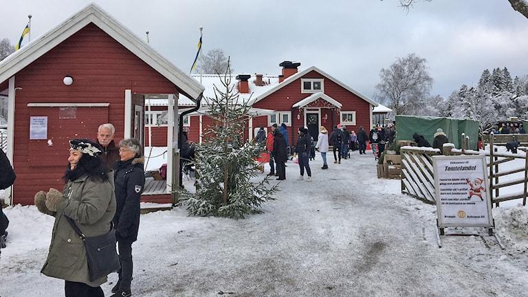 Tomtejakt i vintrigt Åkulla. Foto: Casper Sewerin/Sveriges Radio