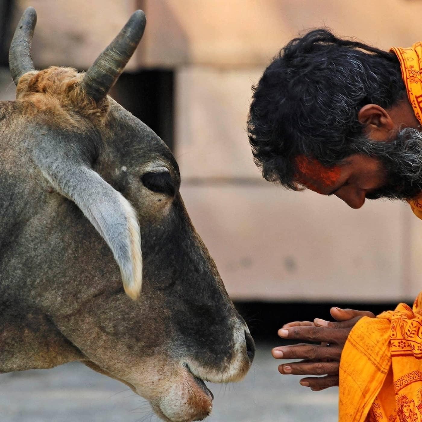 Indiens val – heliga kor och hindunationalism