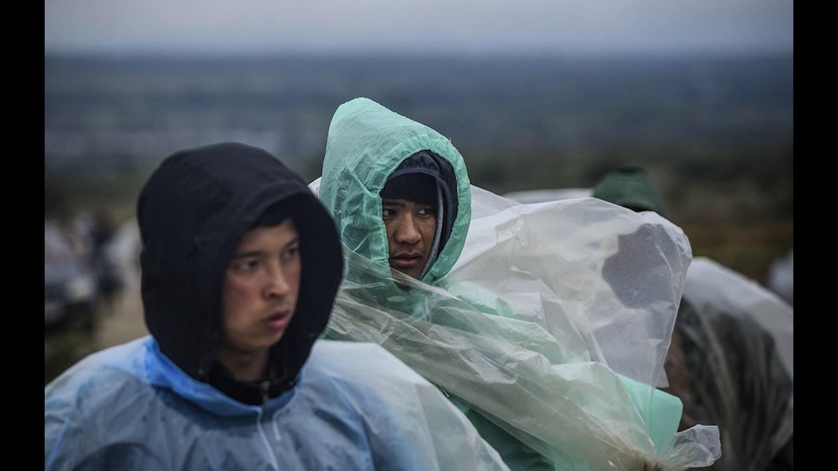 Flyktingar, Europa, Serbien, Afghanistan