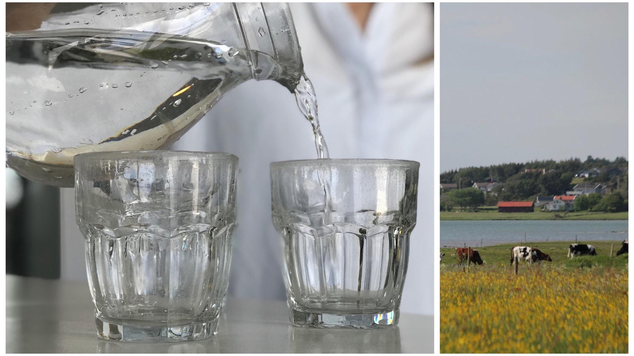 Vattenglas och strandäng.