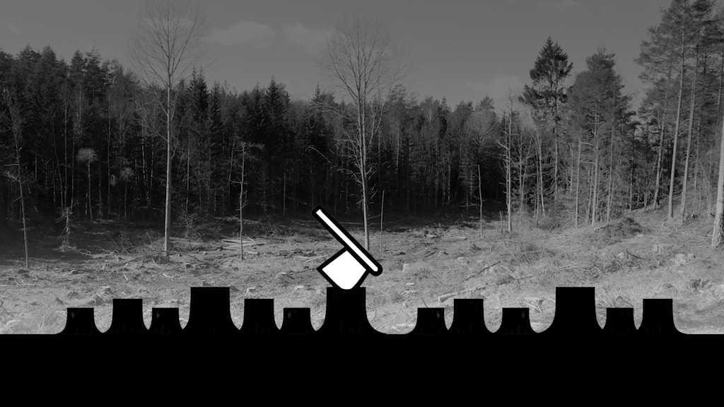 Striden om skogen, foto med grafik.