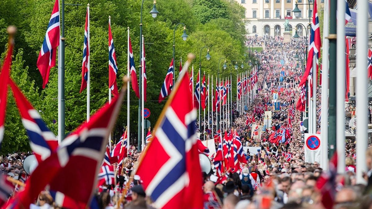 Många norska flaggor längs en gata.