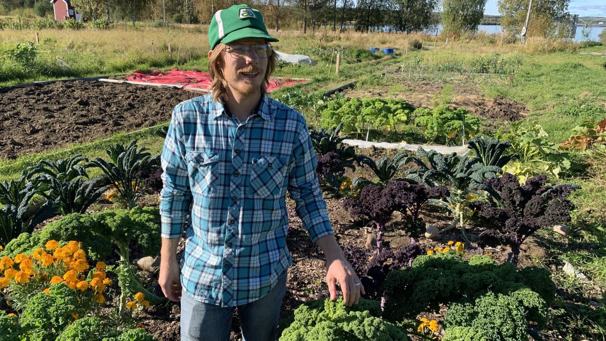 Josh Armfield i rutig skjorta bland sina odlingar.
