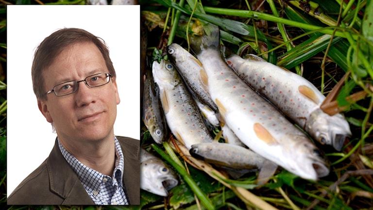 sdlsye13f61-nh fiskdöd länsstyrelsen Peder Eriksson