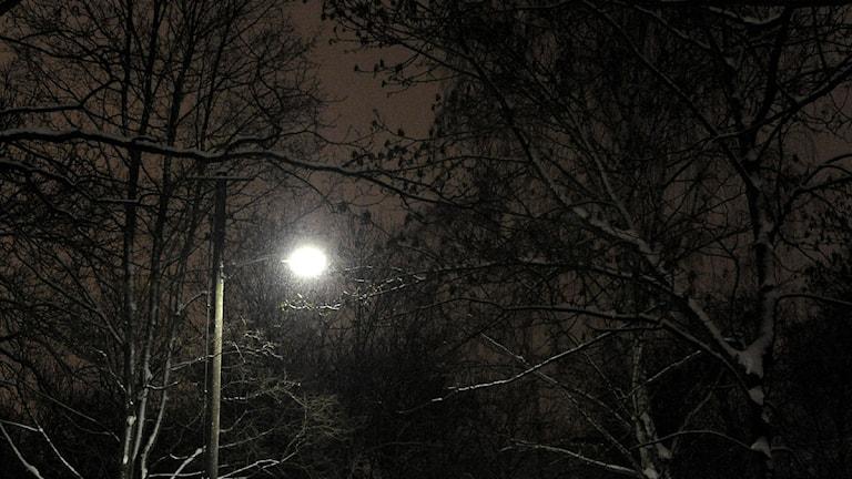 Träd i mörker. Foto: Anders Wiklund/Scanpix.