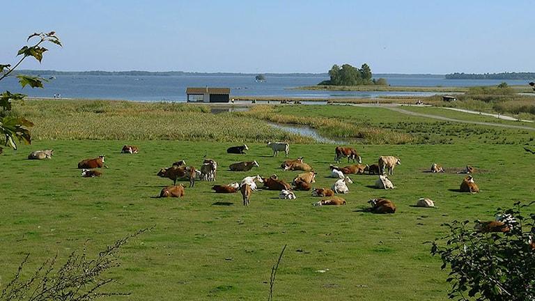 Rynningevikens naturreservat med Hemfjärden i bakgrunden.