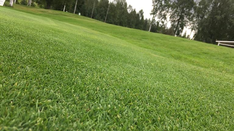 Golfbanan i Karlskoga måste luftas efter helgens skyfall.