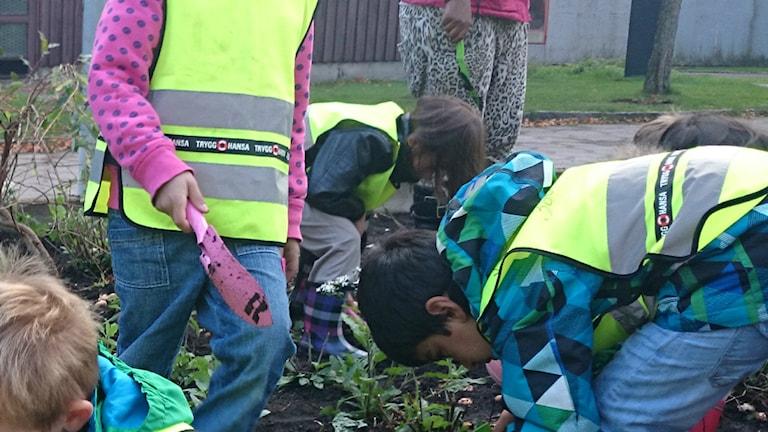 Barn på förskola i planteringstagen.