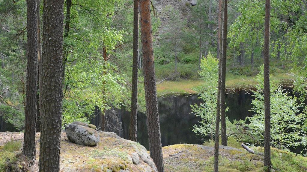 Tiveden, skog, natur