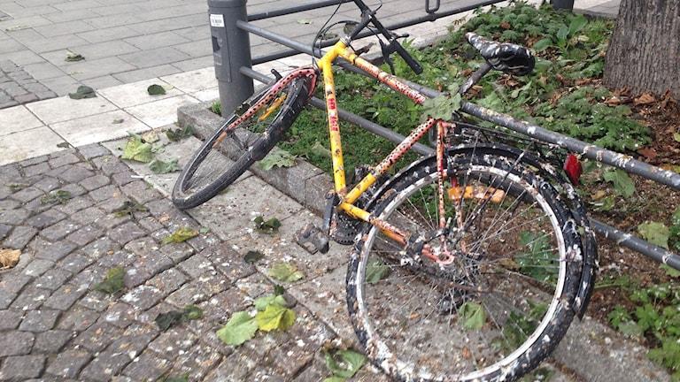 Kajor har skitat ner en cykel som står under ett träd.