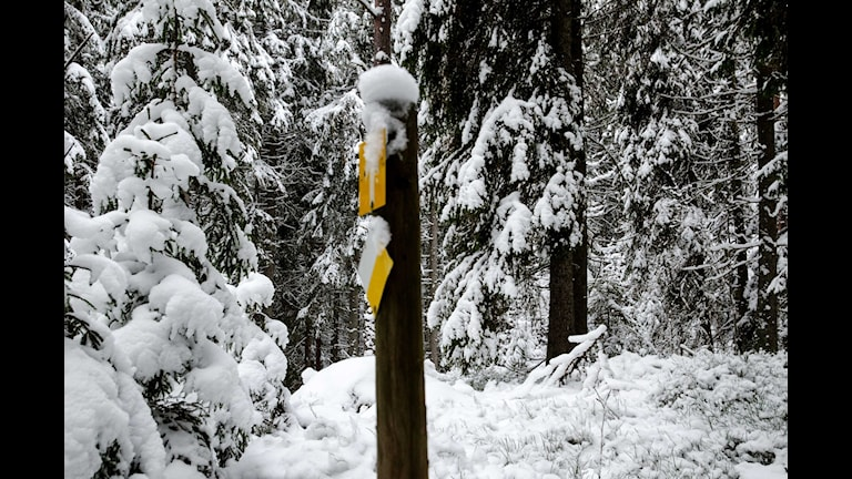Skog Fuxboudden mellan Karlskoga och Villingsberg