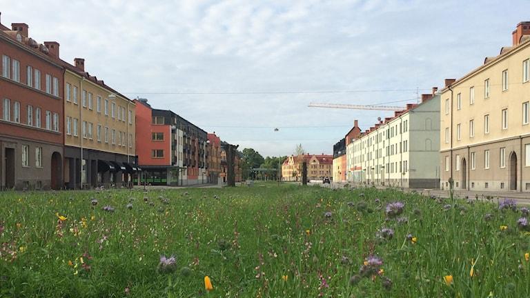 Hertig Karls allé Örebro blomsteräng