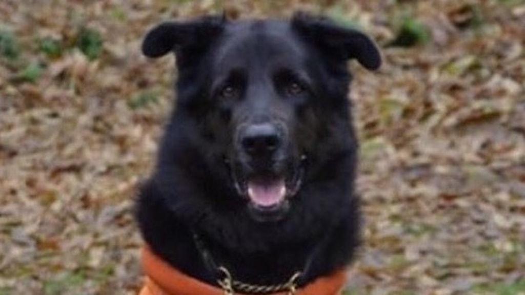 Hund med orange tröja. Foto: Polisen.