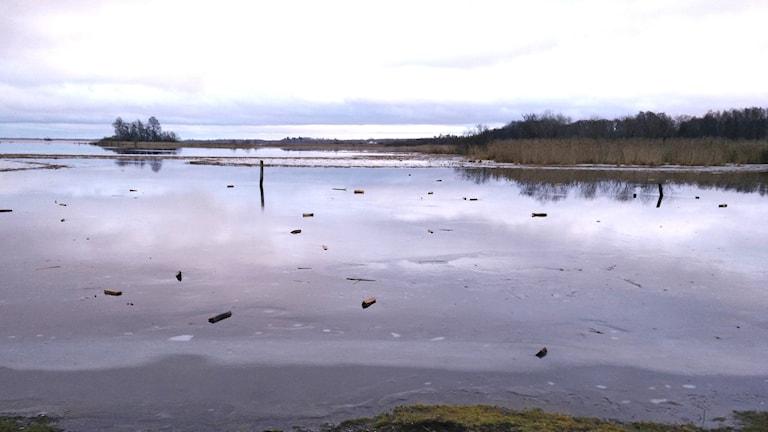Någon eller några har kastat ut vedträn på isen vid Rynningeviken.